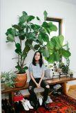 plantes 7